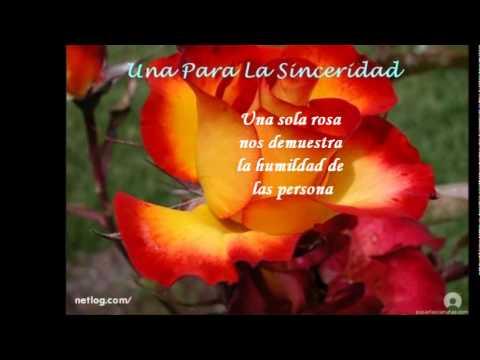 Significado de las rosas y sus colores youtube - Gama de colores rosas ...