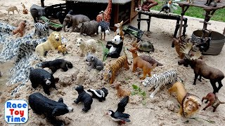 Schleich Wildlife Animals Figure Collection in the sand - Learn Animal Names For Kids