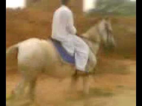 Mouj On Horse video
