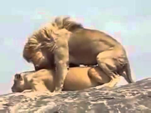 Эксклюзивные зоо порно ролики