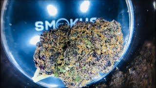 The Top Ten Amsterdam Coffeeshops With Jimmy Nevski - Part Two