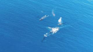 Whales of Poipu