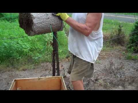 Tips On Catching Bee Swarms. How To Keep And Get Bees. Bee Swarm Let Down