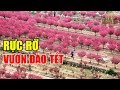 Lạc lối giữa Vườn hoa Đào cuối năm ở Nam Từ Liêm, Hà Nội thumbnail