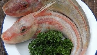 How To Skin And Fillet A Red Gurnard.Sea Robin.