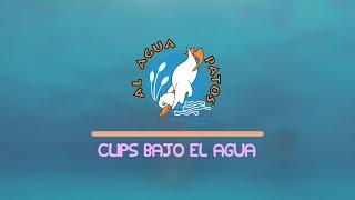 Al Agua Patos - Clips Bajo El Agua