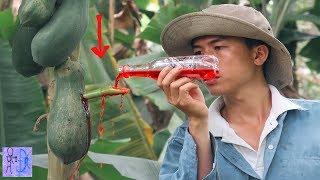 Thử Đổ Nước Sting Vào Trái Đủ Đủ Ủ Men Và Kết Quả Bất Ngờ .Uống Nước Sting Đu Dủ .Papaya VS Pepsi