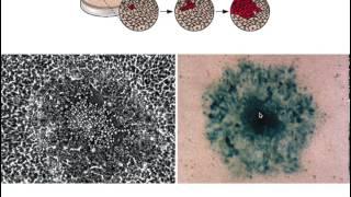 Assay of viral infectivity