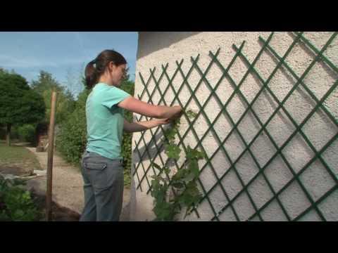 Les vignes, les conseils de plantation d'Horti Sologne - YouTube