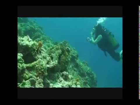 Diving with Scuba Do Zanzibar.wmv