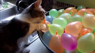 funny cat videos in water - top 200 funny animals vines || funnyvines