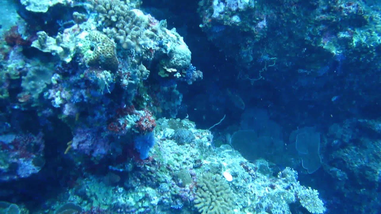アオウミガメの画像 p1_34