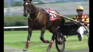 Muscle Hill roundtable -- USTA harness racing Hoof beats standardbred
