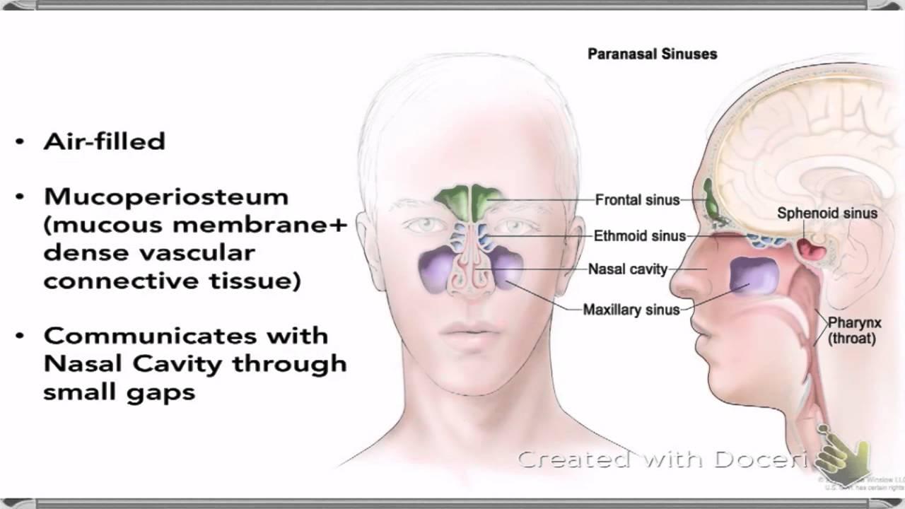 Paranasal air sinuses opening cipro