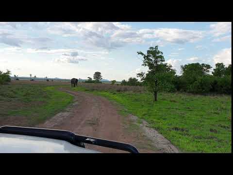 Elefant Liwonde Plains 2019 12 01 15 26 18