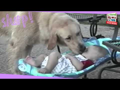 Speciale Mr Blog: gli animali più pazzi del mondo – video divertentissimi