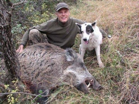 Ibex Hunting in Tajikistan Ibex in Tajikistan by