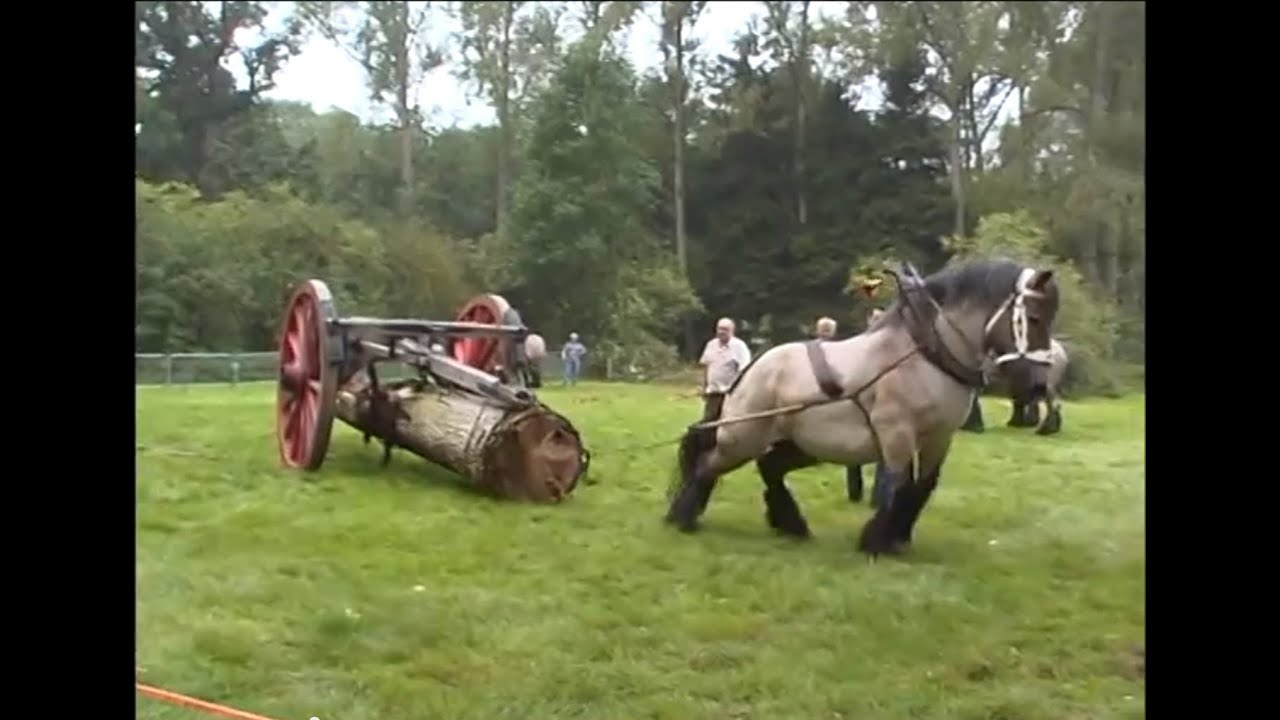 Horse Health and MedicalThink Like a HorseRick Gore