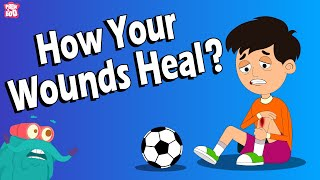 How Do Your Wounds Heal? | WOUNDS | What Are Wounds? | The Dr Binocs Show | Peekaboo Kidz