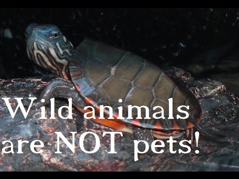 Keeping WILD Animals As PETS Is WRONG!