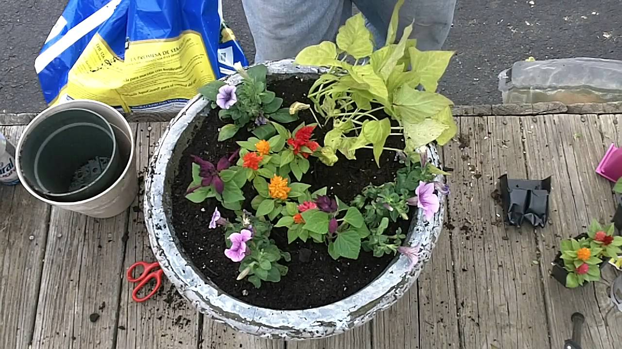 Shade Garden Ideas Layout