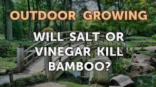 Will Salt or Vinegar Kill Bamboo?