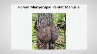 Pohon Unik Kejadian Aneh Tapi Nyata di Dunia Youtube
