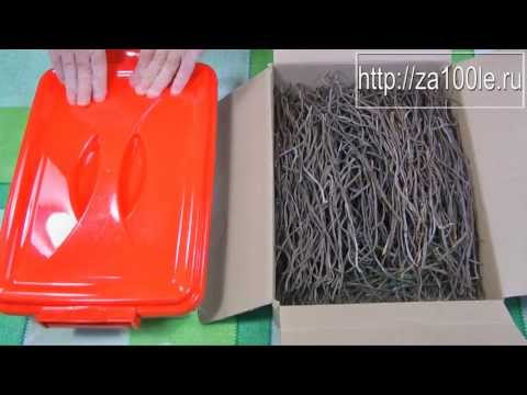 Сбор и обработка папоротника (Косари) видео