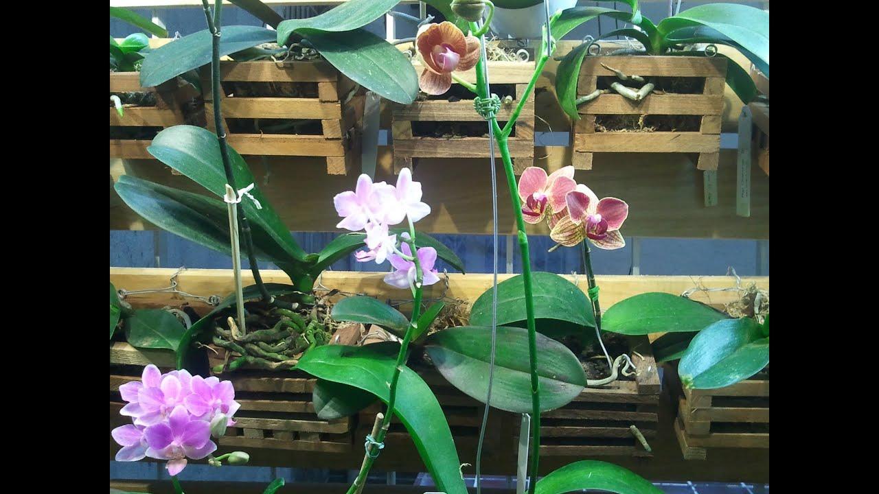 Jardim de Inverno de Orquideas com iluminação artificial