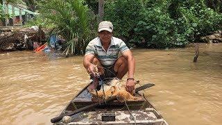 Cùng Dượng Út đi chài mồi bắt tôm càng xanh ở sông Hòa Lộc, huyện Mỏ Cày Bắc