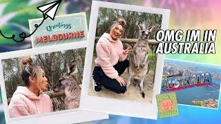 freaking out for 14 mins over kangaroos
