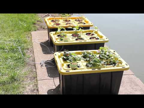 Home Made Outdoor Deep Water Culture  Dwc  Hydroponics Part 1