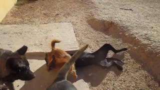 Cuca & Titi jugando, Asoka Castalla 130616