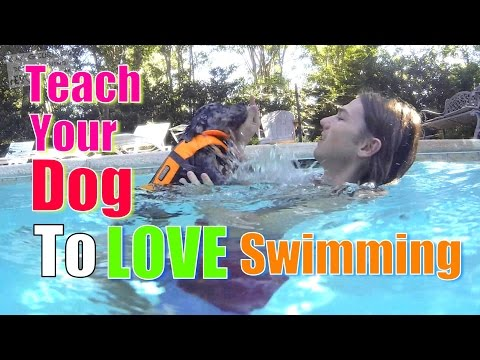 How To Teach Your Dog To Love Water & Swimming video