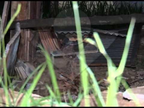 Homicídio 186: mulher é encontrada morta em chácara