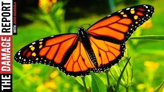Climate Change Killed 97% of California's Butterflies