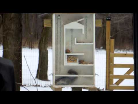 How To Make A Squirrel Feeder Video
