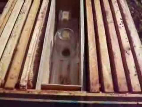 Пчеловодство. Пакующая кассета.