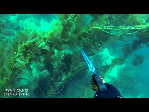 Spearfishing Catalina Island October 2014