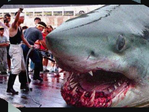 The Megalodon Shark