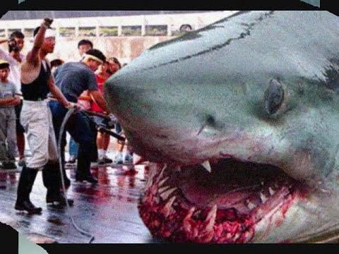 The Megalodon Shark