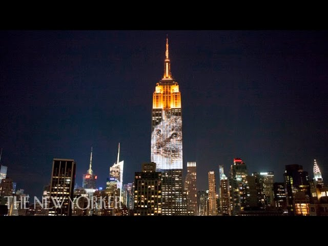 Endangered Species Light Up the Empire State Building