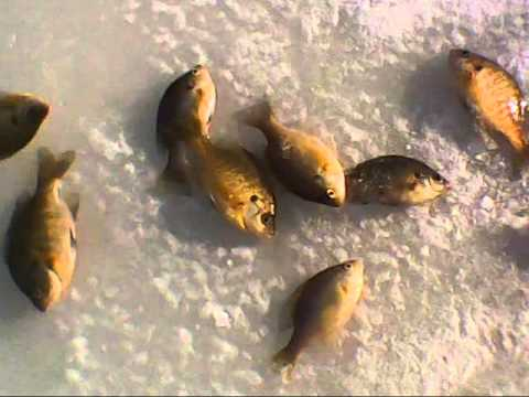 Ice Fishing Thornapple Lake, Hastings Michigan.wmv