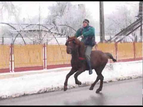 Boboteaza cailor