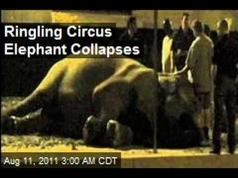 IT'S FINAL COUNTDOWN TO RINGLING BROS CIRCUS FEDERAL CRUELTY BAN ! - SO.CALIFORNIA PROTEST 2013 !!