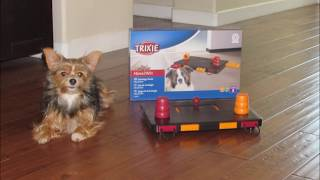 How smart is your pet? Trixie dog puzzle toy activity treat game!