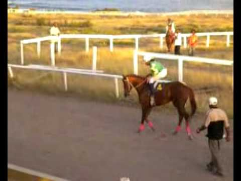 Horse racing in Nevis 22 - Post Parade