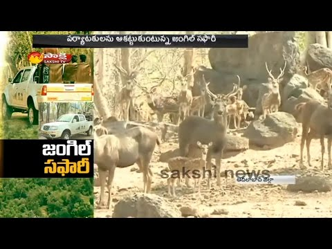 Jungle Safari in Adilabad Forest    Huge Response From Tourists