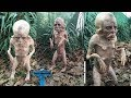 Top 10 Most Mysterious Creature Caught On Camera Unbelievable Things Caught On Tape mp3