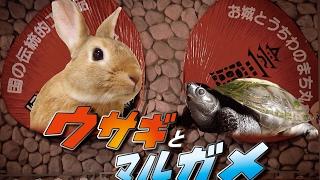 【丸亀市 PR動画】ウサギとマルガメ(CC字幕付)